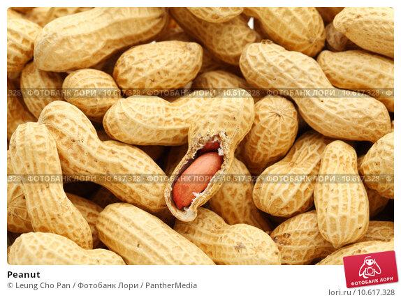 Peanut. Стоковое фото, фотограф Leung Cho Pan / PantherMedia / Фотобанк Лори