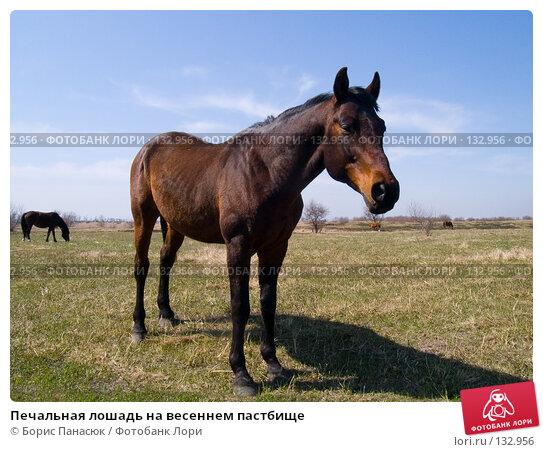 Купить «Печальная лошадь на весеннем пастбище», фото № 132956, снято 10 апреля 2005 г. (c) Борис Панасюк / Фотобанк Лори