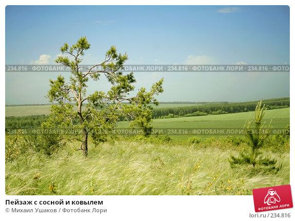 Купить «Пейзаж с сосной и ковылем», фото № 234816, снято 4 июня 2006 г. (c) Михаил Ушаков / Фотобанк Лори