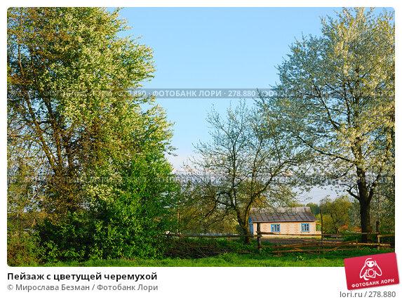 Пейзаж с цветущей черемухой, фото № 278880, снято 27 апреля 2008 г. (c) Мирослава Безман / Фотобанк Лори
