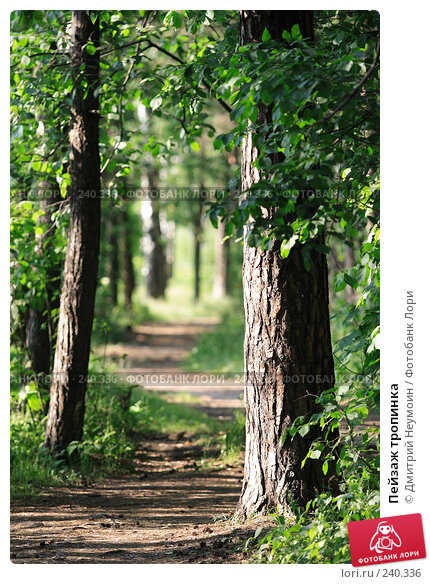 Пейзаж тропинка, эксклюзивное фото № 240336, снято 15 июня 2007 г. (c) Дмитрий Неумоин / Фотобанк Лори