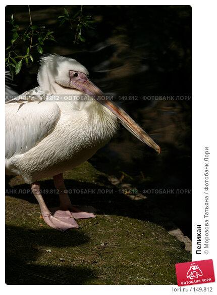 Пеликан, фото № 149812, снято 9 июля 2005 г. (c) Морозова Татьяна / Фотобанк Лори