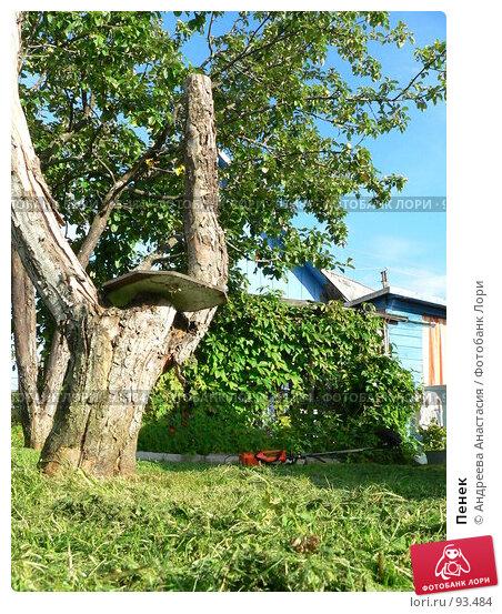 Пенек, фото № 93484, снято 1 августа 2006 г. (c) Андреева Анастасия / Фотобанк Лори