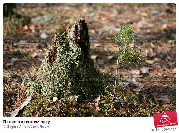 Пенек в осеннем лесу, фото № 299992, снято 23 сентября 2007 г. (c) Gagara / Фотобанк Лори