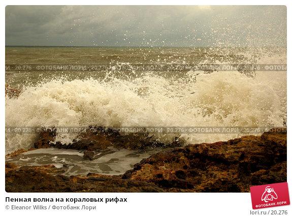 Купить «Пенная волна на кораловых рифах», фото № 20276, снято 5 марта 2007 г. (c) Eleanor Wilks / Фотобанк Лори