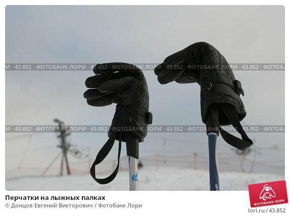 Перчатки на лыжных палках, фото № 43852, снято 1 февраля 2007 г. (c) Донцов Евгений Викторович / Фотобанк Лори