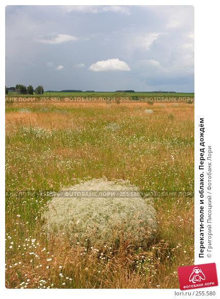 Перекати-поле и облако. Перед дождём, фото № 255580, снято 1 июля 2007 г. (c) Григорий Писоцкий / Фотобанк Лори