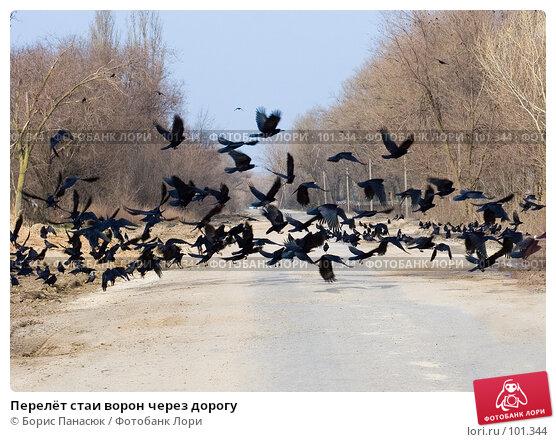 Перелёт стаи ворон через дорогу, фото № 101344, снято 10 марта 2007 г. (c) Борис Панасюк / Фотобанк Лори
