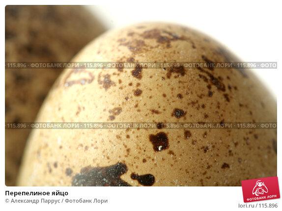 Перепелиное яйцо, фото № 115896, снято 15 сентября 2007 г. (c) Александр Паррус / Фотобанк Лори