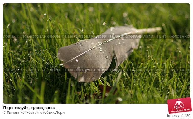 Купить «Перо голубя, трава, роса», фото № 11180, снято 17 октября 2006 г. (c) Tamara Kulikova / Фотобанк Лори
