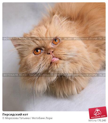 Персидский кот, фото № 70240, снято 19 ноября 2006 г. (c) Морозова Татьяна / Фотобанк Лори