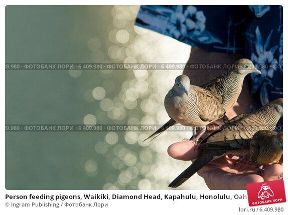 Купить «Person feeding pigeons, Waikiki, Diamond Head, Kapahulu, Honolulu, Oahu, Hawaii, USA», фото № 6409980, снято 5 февраля 2013 г. (c) Ingram Publishing / Фотобанк Лори