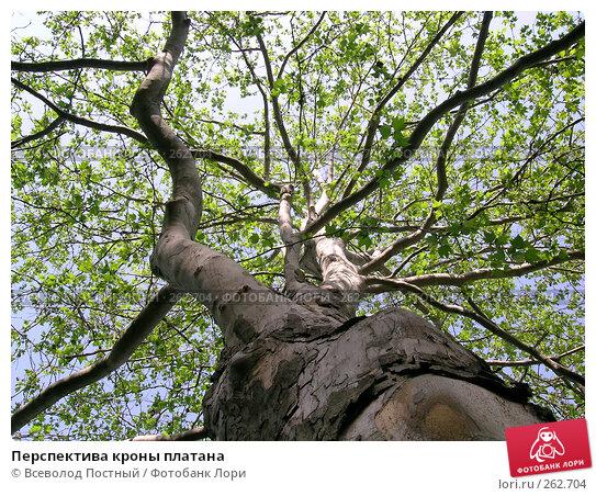 Перспектива кроны платана, фото № 262704, снято 22 апреля 2008 г. (c) Всеволод Постный / Фотобанк Лори