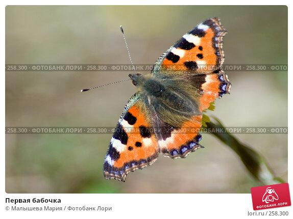 Первая бабочка, фото № 258300, снято 12 апреля 2008 г. (c) Малышева Мария / Фотобанк Лори