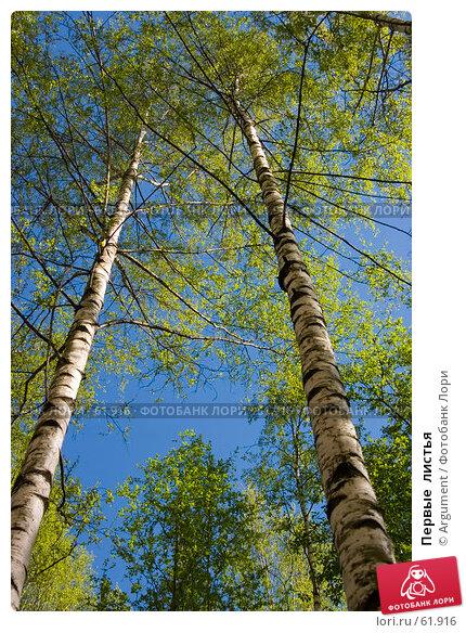 Первые  листья, фото № 61916, снято 7 мая 2006 г. (c) Argument / Фотобанк Лори