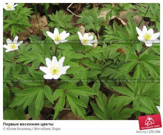 Первые весенние цветы, фото № 270396, снято 1 мая 2008 г. (c) Юлия Козинец / Фотобанк Лори