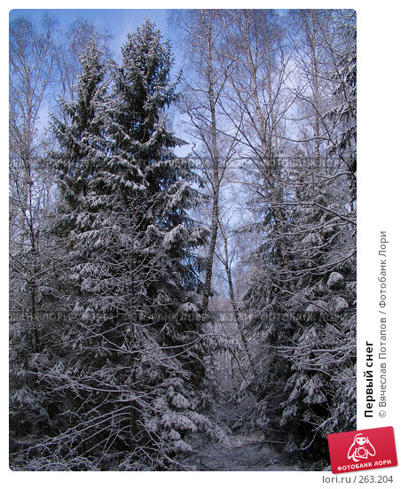 Первый снег, фото № 263204, снято 5 ноября 2007 г. (c) Вячеслав Потапов / Фотобанк Лори