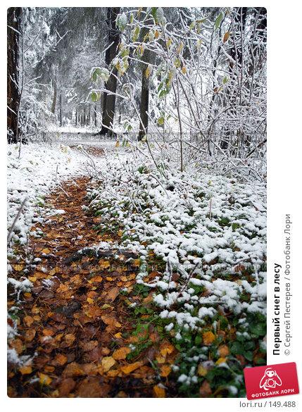Первый снег в лесу, фото № 149488, снято 14 октября 2007 г. (c) Сергей Пестерев / Фотобанк Лори