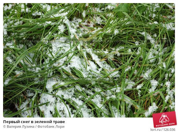 Первый снег в зеленой траве, фото № 126036, снято 18 сентября 2006 г. (c) Валерия Потапова / Фотобанк Лори