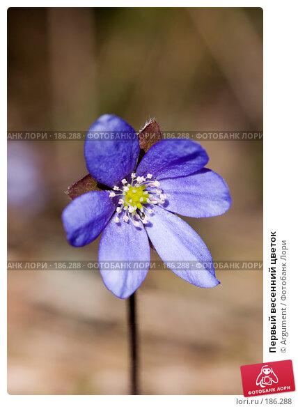 Первый весенний цветок, фото № 186288, снято 1 мая 2007 г. (c) Argument / Фотобанк Лори