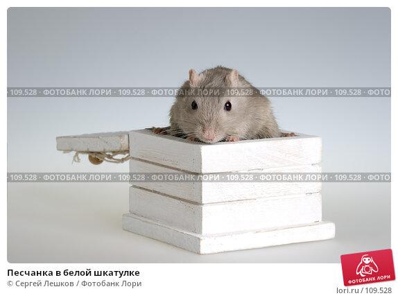 Купить «Песчанка в белой шкатулке», фото № 109528, снято 23 сентября 2007 г. (c) Сергей Лешков / Фотобанк Лори