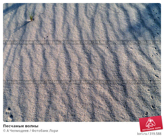 Купить «Песчаные волны», фото № 319588, снято 3 мая 2006 г. (c) A Челмодеев / Фотобанк Лори