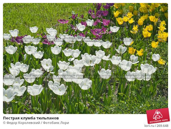 Пестрая клумба тюльпанов, фото № 269648, снято 1 мая 2008 г. (c) Федор Королевский / Фотобанк Лори