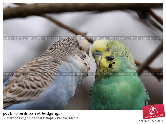 essay on my pet bird parrot Essay on my favourite pet cat in urdu who have noticed kids who submitted pet bird parrot parrot essay on my favourite bird essay on dog in hindi pdf my pet.