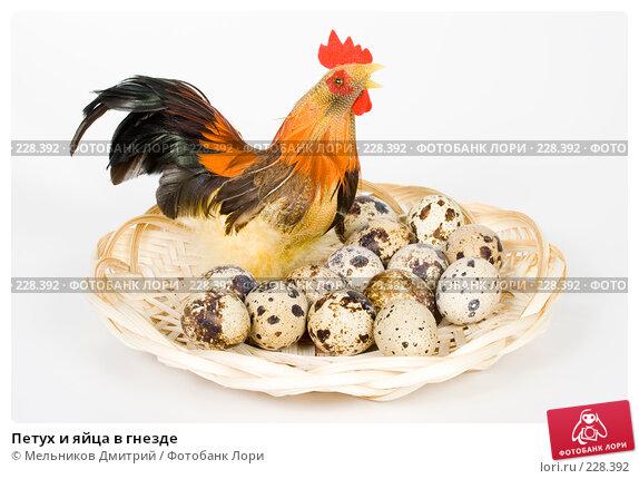 Петух и яйца в гнезде, фото № 228392, снято 9 марта 2008 г. (c) Мельников Дмитрий / Фотобанк Лори