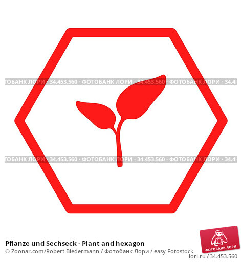 Pflanze und Sechseck - Plant and hexagon. Стоковое фото, фотограф Zoonar.com/Robert Biedermann / easy Fotostock / Фотобанк Лори