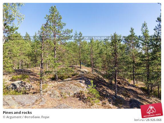 Купить «Pines and rocks», фото № 28926068, снято 18 июля 2018 г. (c) Argument / Фотобанк Лори