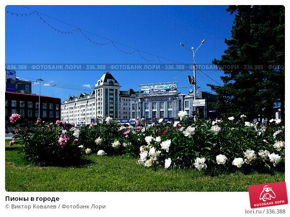 Купить «Пионы в городе», фото № 336388, снято 25 июня 2008 г. (c) Виктор Ковалев / Фотобанк Лори