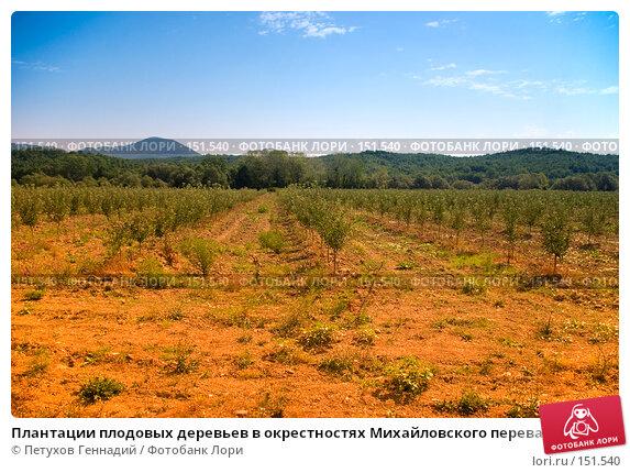 Плантации плодовых деревьев в окрестностях Михайловского перевала (побережье Черного моря), фото № 151540, снято 9 августа 2007 г. (c) Петухов Геннадий / Фотобанк Лори