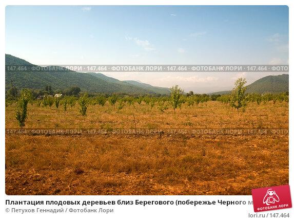 Плантация плодовых деревьев близ Берегового (побережье Черного моря), фото № 147464, снято 8 августа 2007 г. (c) Петухов Геннадий / Фотобанк Лори