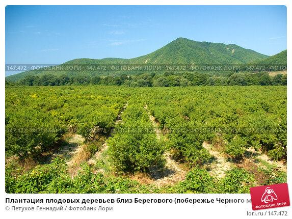 Плантация плодовых деревьев близ Берегового (побережье Черного моря), фото № 147472, снято 9 августа 2007 г. (c) Петухов Геннадий / Фотобанк Лори