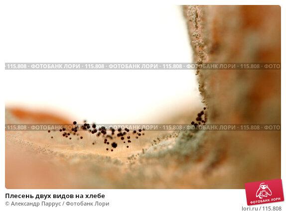 Купить «Плесень двух видов на хлебе», фото № 115808, снято 18 сентября 2007 г. (c) Александр Паррус / Фотобанк Лори