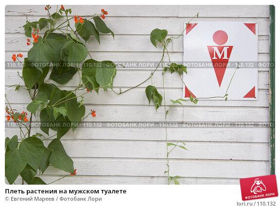 Плеть растения на мужском туалете, фото № 110132, снято 25 августа 2007 г. (c) Евгений Мареев / Фотобанк Лори