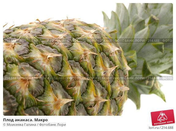 Плод ананаса. Макро, фото № 214688, снято 25 ноября 2007 г. (c) Моисеева Галина / Фотобанк Лори