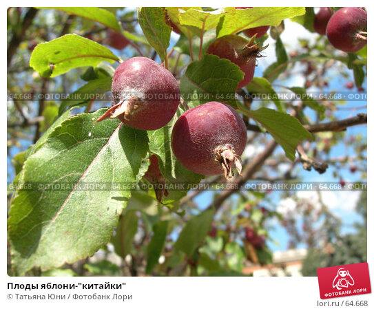 """Плоды яблони-""""китайки"""", эксклюзивное фото № 64668, снято 23 июля 2007 г. (c) Татьяна Юни / Фотобанк Лори"""