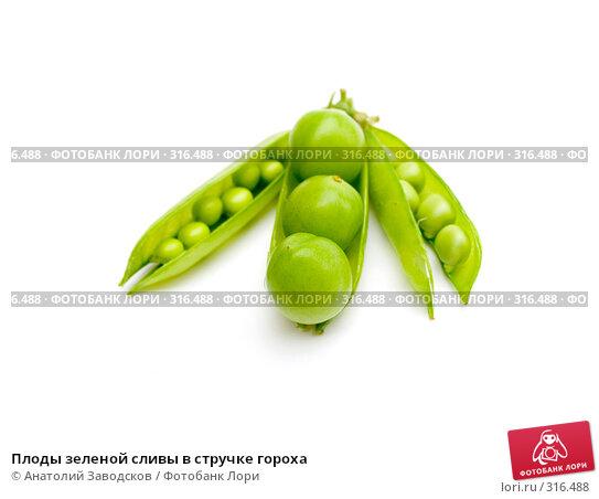 Плоды зеленой сливы в стручке гороха, фото № 316488, снято 29 мая 2006 г. (c) Анатолий Заводсков / Фотобанк Лори