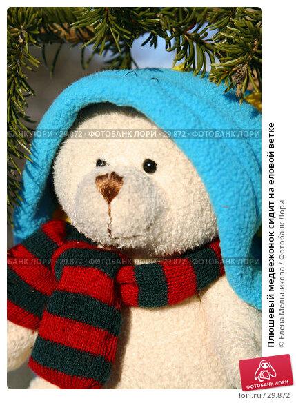 Плюшевый медвежонок сидит на еловой ветке, фото № 29872, снято 28 марта 2007 г. (c) Елена Мельникова / Фотобанк Лори