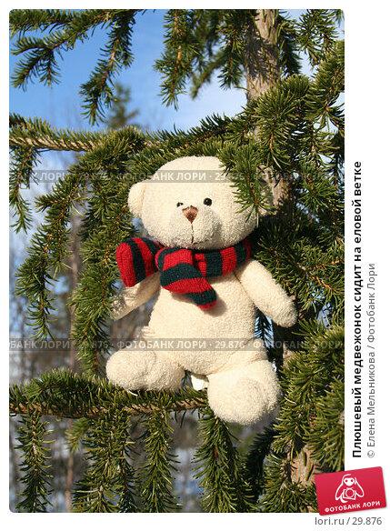 Плюшевый медвежонок сидит на еловой ветке, фото № 29876, снято 28 марта 2007 г. (c) Елена Мельникова / Фотобанк Лори