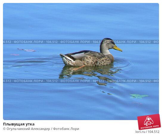 Купить «Плывущая утка», фото № 104512, снято 23 апреля 2018 г. (c) Огульчанский Александер / Фотобанк Лори