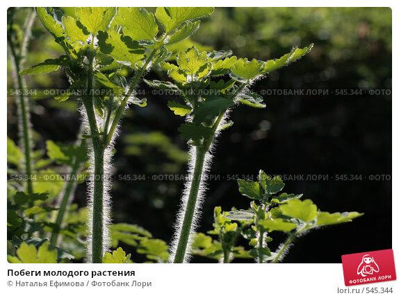 Побеги молодого растения. Стоковое фото, фотограф Наталья Ефимова / Фотобанк Лори