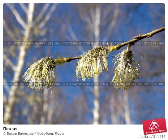 Почки, фото № 311164, снято 27 апреля 2008 г. (c) Бяков Вячеслав / Фотобанк Лори