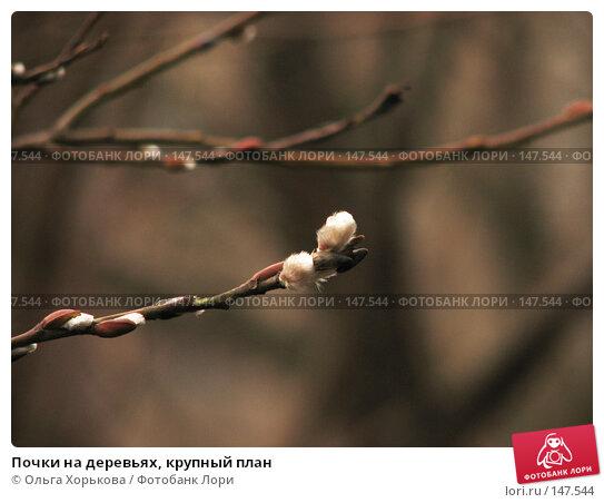 Купить «Почки на деревьях, крупный план», фото № 147544, снято 22 марта 2007 г. (c) Ольга Хорькова / Фотобанк Лори
