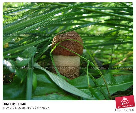 Купить «Подосиновик», эксклюзивное фото № 58300, снято 19 августа 2004 г. (c) Ольга Визави / Фотобанк Лори