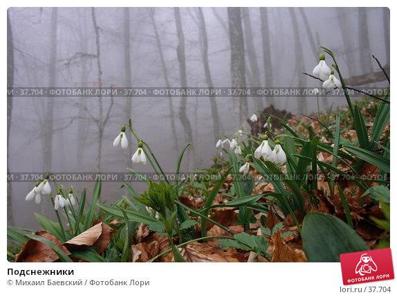 Купить «Подснежники», фото № 37704, снято 1 мая 2007 г. (c) Михаил Баевский / Фотобанк Лори