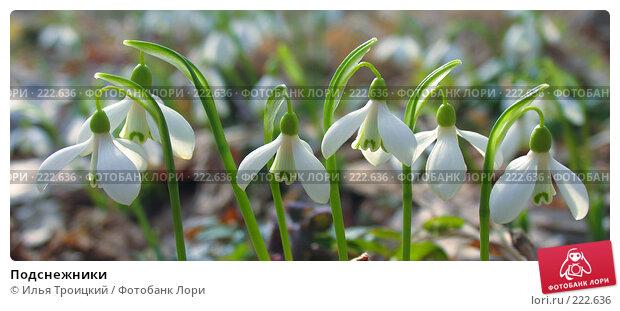 Подснежники, фото № 222636, снято 9 марта 2008 г. (c) Илья Троицкий / Фотобанк Лори