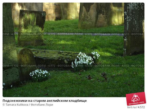 Подснежники на старом английском кладбище, фото № 4572, снято 15 февраля 2006 г. (c) Tamara Kulikova / Фотобанк Лори